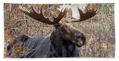 Bull Moose In Autumn Bath Towel by Jack Bell