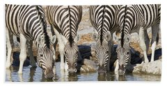 Burchells Zebras Drinking Etosha Np Bath Towel