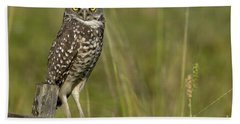 Burrowing Owl Stare Hand Towel by Meg Rousher