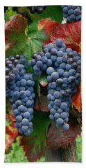 5b6374-cabernet Sauvignon Grapes At Harvest Hand Towel