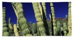 Cacti, Az Usa Hand Towel