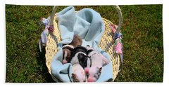 Calicos Pups At Two Days Hand Towel