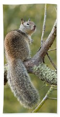 Hand Towel featuring the photograph California Ground Squirrel by Doug Herr