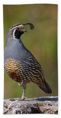 California Quail Hand Towel by Doug Herr