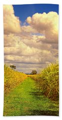 Hand Towel featuring the photograph Cane Fields by Wallaroo Images