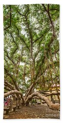Canopy - Banyan Tree Park In Maui Hand Towel