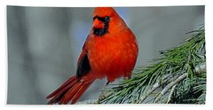 Cardinal In An Evergreen Bath Towel