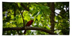 Cardinal In The Trees Hand Towel