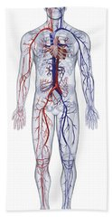Cardiovascular System, Human Body Hand Towel