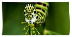 Caterpillar Of The Old World Swallowtail Hand Towel by Torbjorn Swenelius
