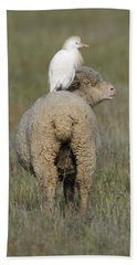 Cattle Egret On Sheep Hand Towel