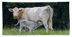 Charolais Cattle Nursing Young Hand Towel