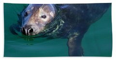 Chatham Harbor Seal Hand Towel by Stuart Litoff
