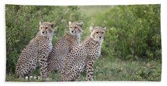 Cheetah Acinonyx Jubatus Cubs Bath Towel