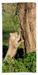 Cheetah Cub Acinonyx Jubatus Climbing Hand Towel