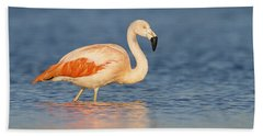 Chilean Flamingo Hand Towel by Ronald Kamphius
