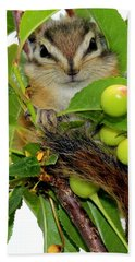 Hand Towel featuring the photograph Chip Or Dale by Barbara Chichester