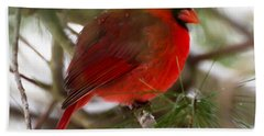 Christmas Cardinal Bath Towel by Kerri Farley