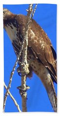 Hawk Close Up  Bath Towel