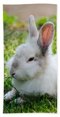 Bath Towel featuring the photograph Close Up Of A Bunny by Sotiris Filippou