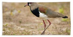 Close-up Of A Southern Lapwing Vanellus Hand Towel by Panoramic Images
