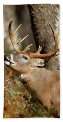 Close-up Of A White-tailed Deer Curling Hand Towel