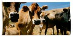 Close Up Of Cows, California, Usa Hand Towel