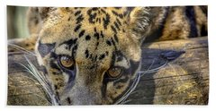 Hand Towel featuring the photograph Clouded Leopard by Steven Sparks