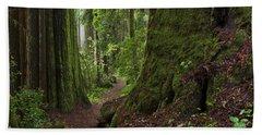 Coast Redwoods And Path Redwood Natl Hand Towel