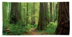 Coastal Sequoia Trees In Redwood Forest Hand Towel