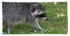 Common Raccoon Hand Towel by Sharon Talson