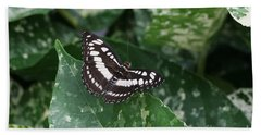 Common Sergeant Butterfly Hand Towel