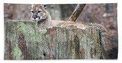 Cougar On A Stump Bath Towel