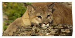 Cougar On Lichen Rock Hand Towel by Sandra Bronstein