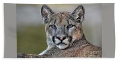 Hand Towel featuring the photograph Cougar  by Savannah Gibbs