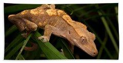 Crested Gecko Rhacodactylus Ciliatus Hand Towel