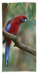 Crimson Rosella Parrot Canberra Hand Towel