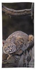 Crouching Bobcat Montana Wildlife Hand Towel