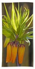 Crown Imperial Fritillaria Imperialis Flower Bath Towel