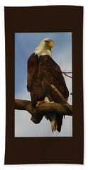 Curious Bald Eagle Hand Towel by Bruce Bley