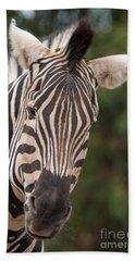 Curious Zebra Hand Towel
