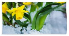 Daffodils In The Snow  Hand Towel