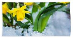 Daffodils In The Snow  Bath Towel