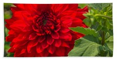 Dahlia Perfection Hand Towel
