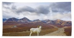 Dalls Sheep Ram Denali National Park Hand Towel