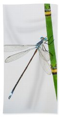 Damselfly On Horsetail Bath Towel
