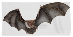 Daubentons Bat Myotis Daubentonii - Murin De Daubenton-murcielago Ribereno-vespertilio Di Daubenton Hand Towel