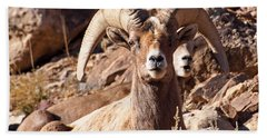 Desert Bighorn Sheep Hand Towel by Nadja Rider