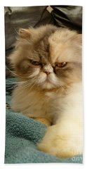 Bath Towel featuring the photograph Do I Look Amused? by Vicki Spindler
