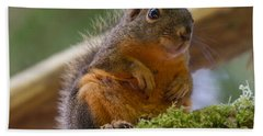 Douglas Squirrel Hand Towel by Paul Rebmann